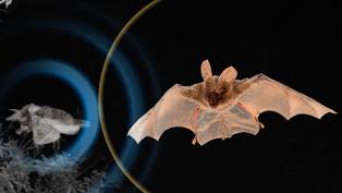 Moth_THUMB