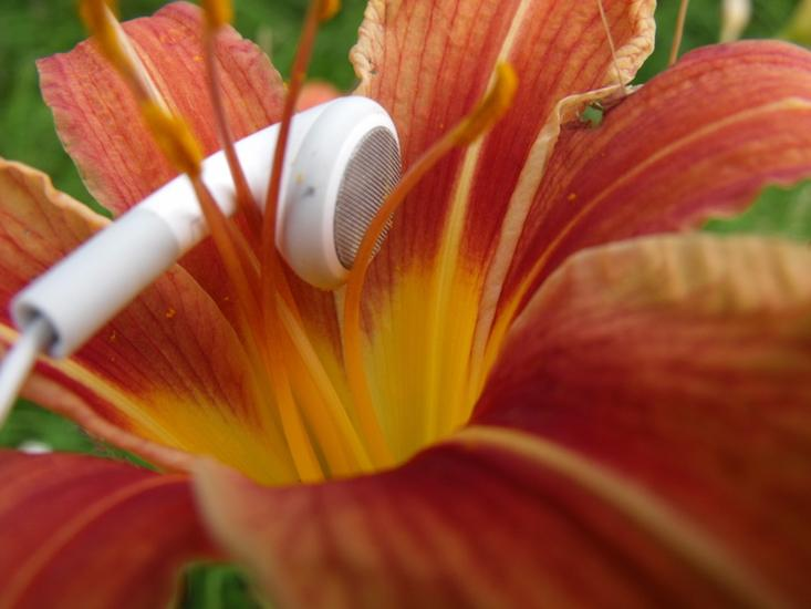"""Plants Have an """"Ear"""" for Music"""