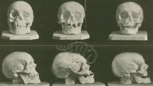 Schubert Haydn Beethoven skulls