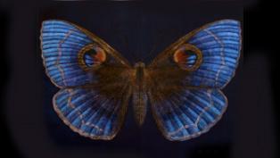 moth thumb