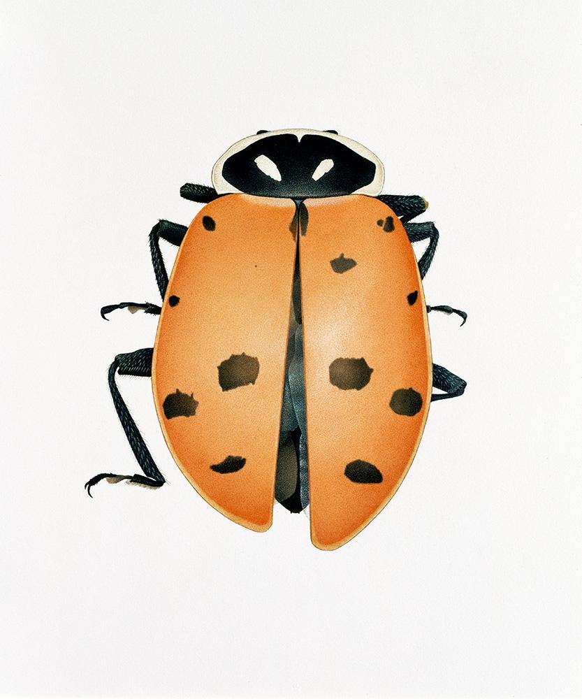 CHH_slide_ladybug