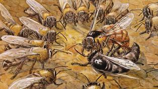 Bee-2_THUMB