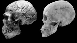 feminized human skulls faces Cieri