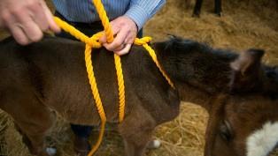 foal madigan squeeze