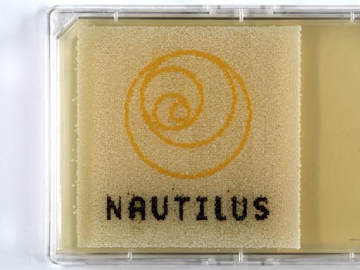 How Can Microscopic Yeast Draw the Nautilus Logo? The New Art of Bio-Pointillism