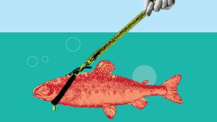 Berger_salmon-TH