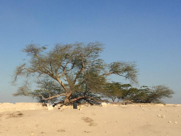 You Need to Know About Bahrain's Loneliest Tree
