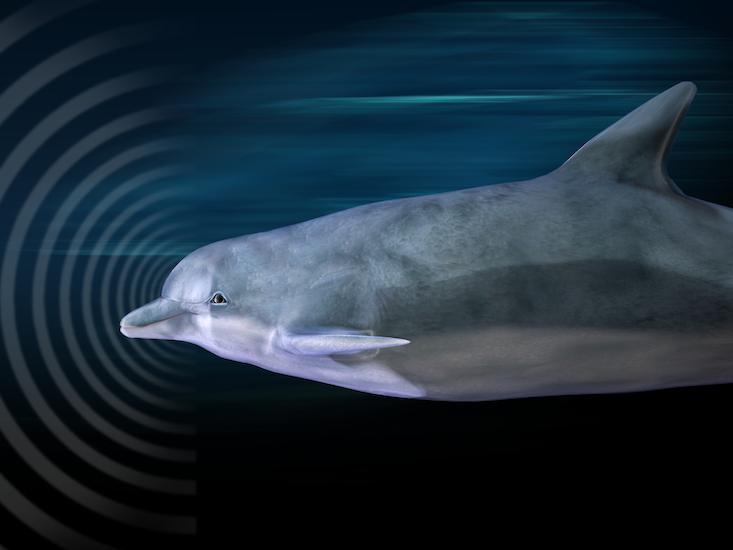Dolphins Are Helping Us Hunt for Aliens
