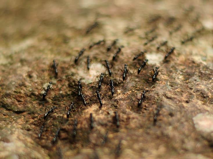 Traffic Wouldn't Jam If Drivers Behaved Like Ants